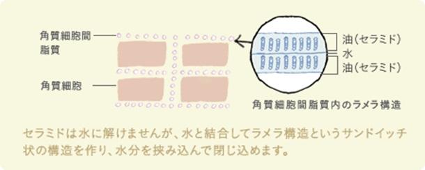 角質細胞間脂質のラメラ構造